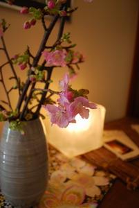 宿内で2月に咲いた桜