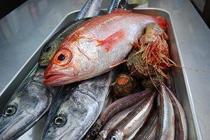 秋の底引網漁