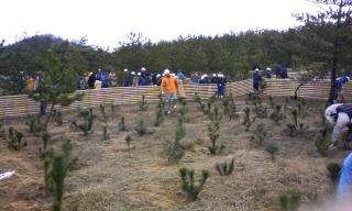 間伐と植林