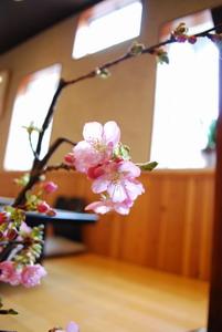 早咲き 2月の桜枝 1