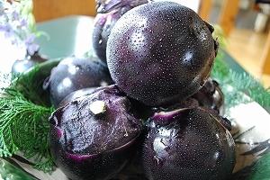 久美浜産の加茂茄子