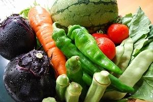 丹後、夏の地野菜たち