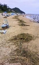 台風9号の影響で