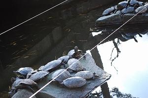 金毘羅神社 亀さん